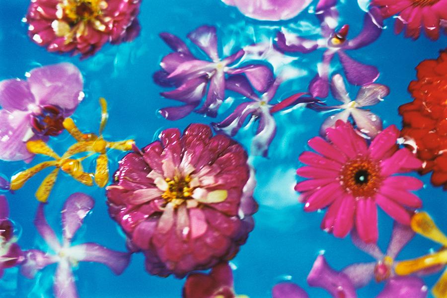 「蜷川実花 写真」の画像検索結果